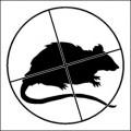 rats-shooting-season-2012b