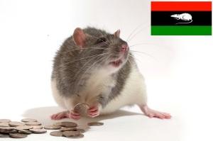 bastard-rats-bani-walid-stolen-money-20121106